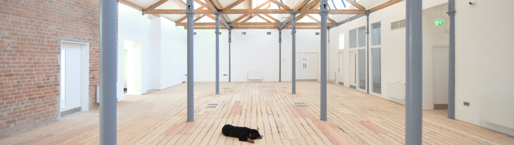 A dog lying in a architecture designed office